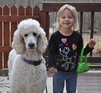 Picket Fence Poodle Rescue Minnesotas Poodle Rescue Rehome